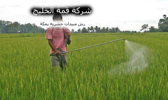 شركة رش مبيدات حشرية بمكة