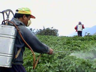رش مبيدات حشرية بمكة
