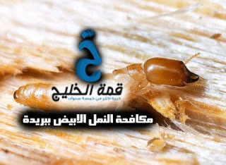 شركات مكافحة النمل الابيض ببريدة