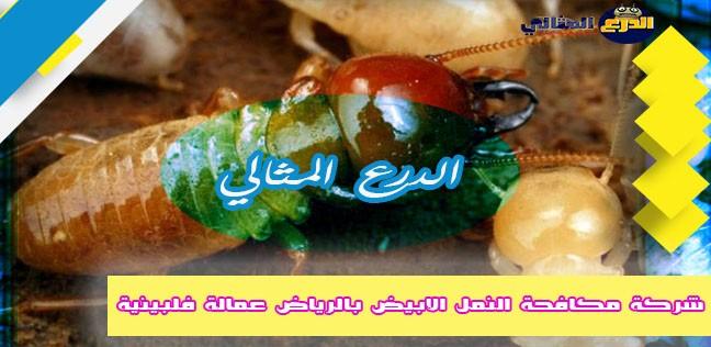 شركة مكافحة النمل الابيض بالرياض عمالة فلبينية